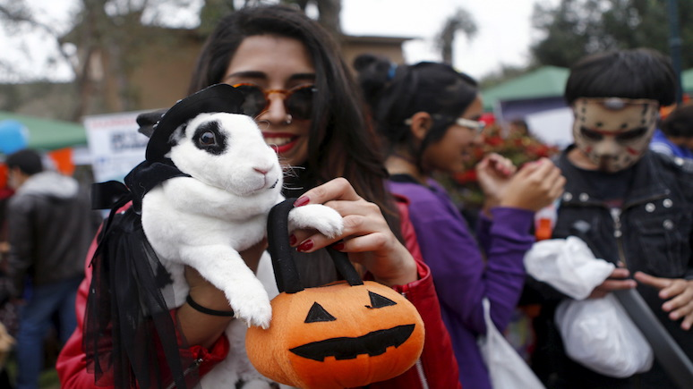 BI: пытаясь найти повод для радости в пандемию, американцы скупают костюмы на Хэллоуин для питомцев