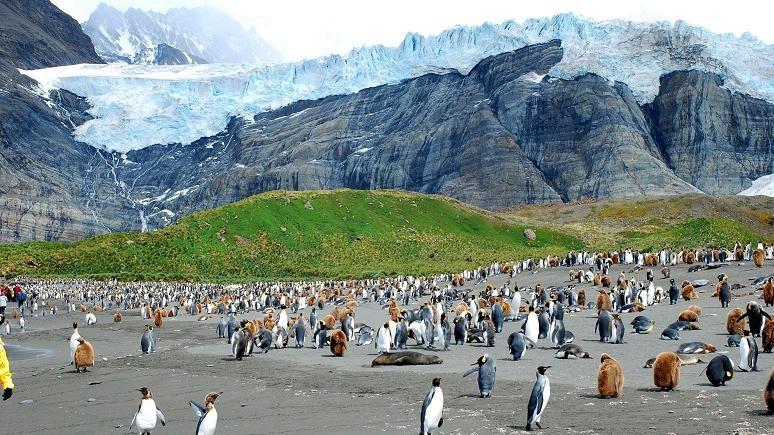 Guardian: гигантский айсберг угрожает заповеднику пингвинов и тюленей