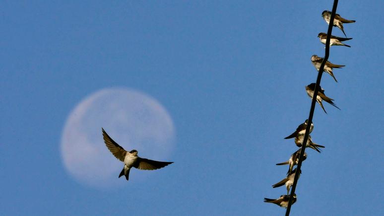 Guardian: учёные установили — причиной массовой гибели птиц в США стал голод