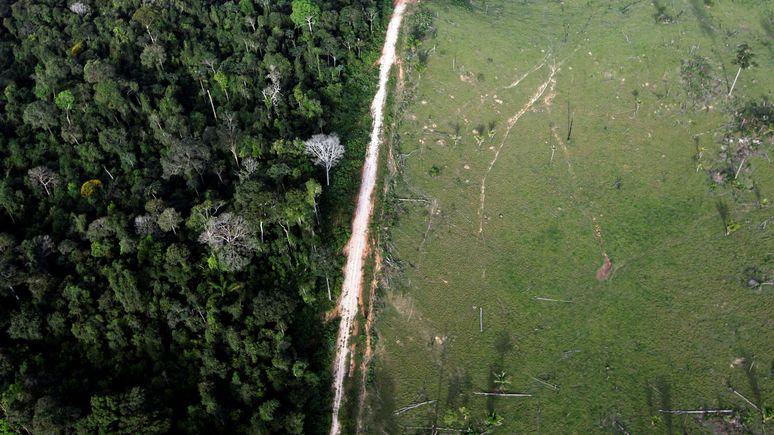 Le Monde: экологи объяснили связь между вырубкой лесов и пандемией