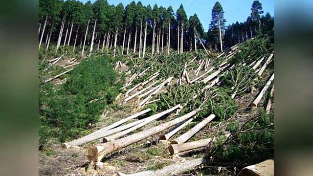 Вырубка лесов доклад на английском 7895