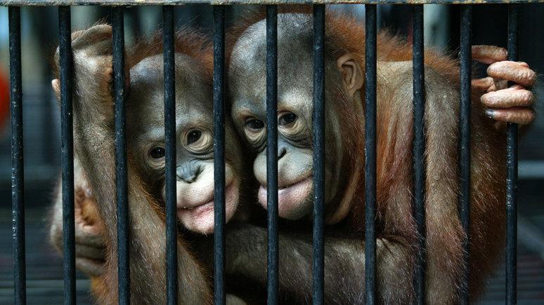 BFM TV: «пушистые сообщники» — обезьяны помогали индийским грабителям обворовывать прохожих
