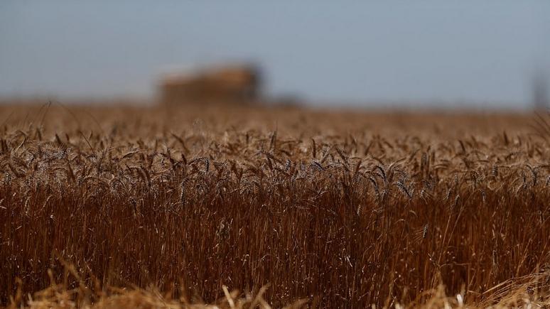 DWN: рекордный рост цен на зерно рискует ударить по карманам потребителей по всему миру