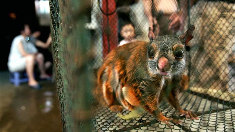 NYT: на рынках Уханя продавались десятки видов животных-переносчиков опасных для человека вирусов