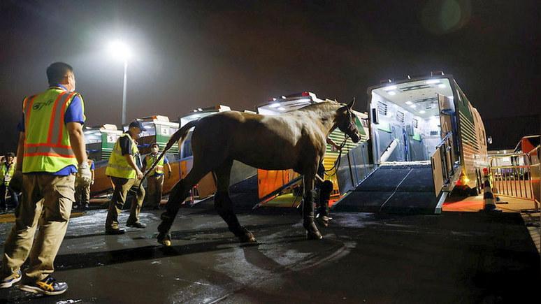 Insider: лошади прилетели — для доставки на Олимпиаду в Токио животных обеспечили паспортами и питанием