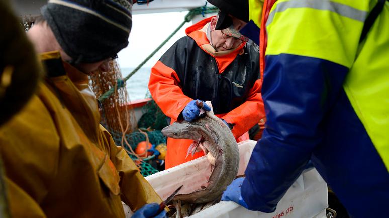 DE: отказ Норвегии делиться рыбными богатствами привёл британцев в ярость — ИноТВ