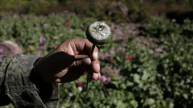 Le Monde: афганские талибы нацелились на контроль над опиумными плантациями