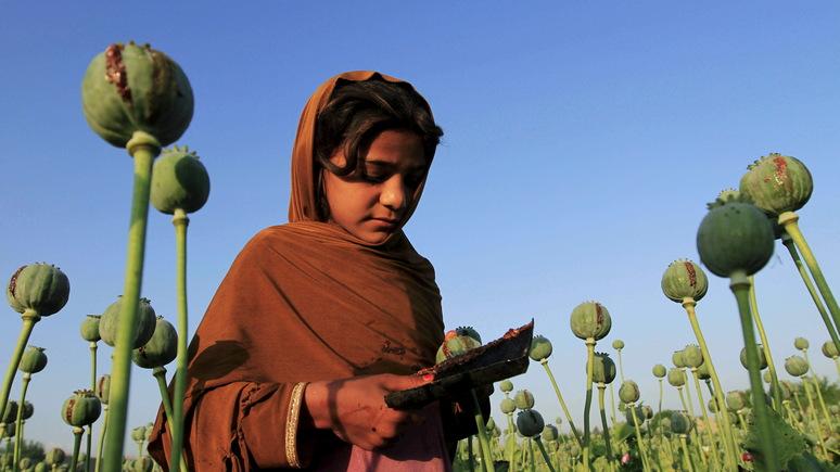 SVT: ООН уверена, что «Талибан» зарабатывает миллионы на наркоторговле
