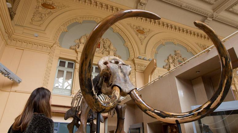 Evening Standard: смелый, но спорный проект — учёные задумали вернуть в Арктику мамонтов