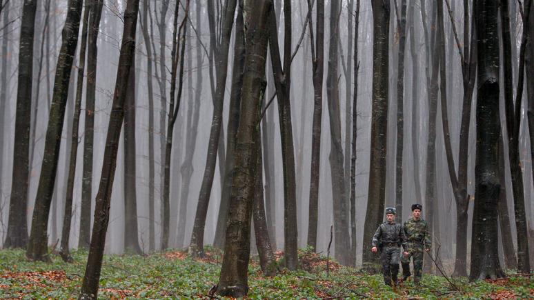 Придётся продавать воздух: эксперт рассказал, что ждет Украину после разрешения продажи леса