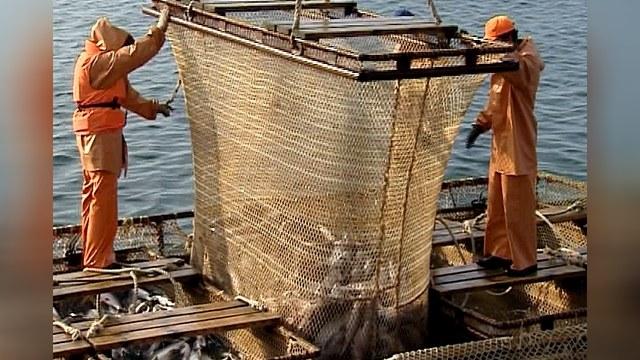 Норвежскому лососю закрыли российский рынок