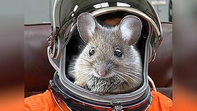 Российские спецслужбы положили глаз на мышей