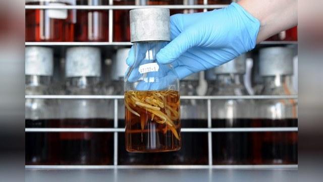 Американцы заявили, что тбилисская лаборатория не связана с биооружием