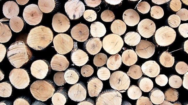 Financial Times: Дальневосточные леса исчезают в китайских лесопилках