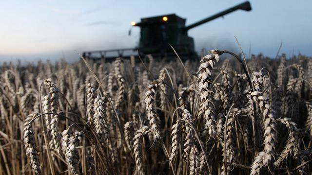 DT: Война санкций может довести британцев до голода