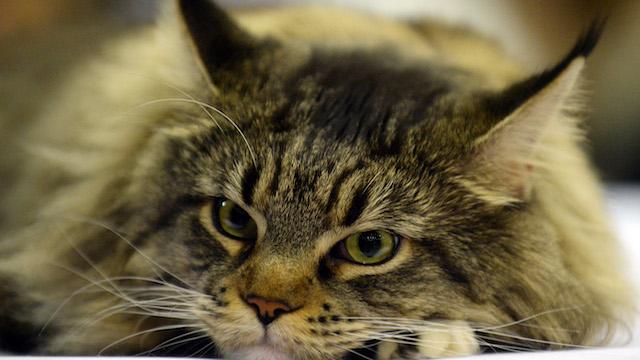 Поляки советуют кошке Матроскиной бежать из России