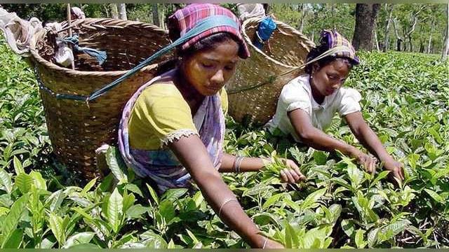 Hindu Business Line: Индия предлагает России платить за чай рупиями