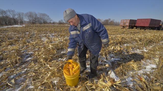 CD: У китайских арендаторов большие виды на бесплатные гектары России