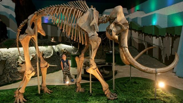 Российский ученый: Древних мамонтов погубил недостаток кальция