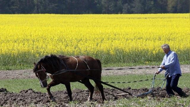 Washington Post: Украина отдалась на растерзание ГМО-гигантам