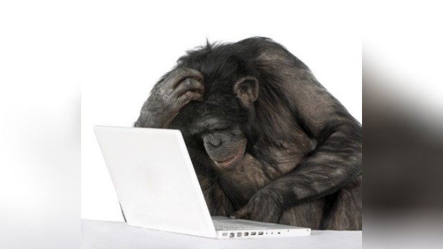 Fortune: «Забавные обезьяны» помогли взломать переписку Обамы