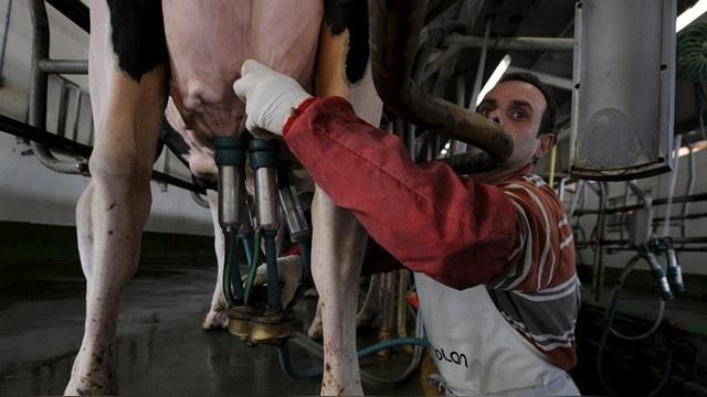 Ouest-France: Российское эмбарго завалило Францию жирной свининой