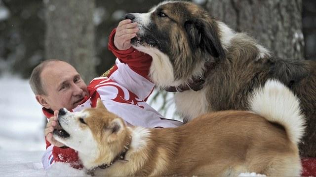 Libération: Путин использует «животную пропаганду», чтобы улучшить свой образ