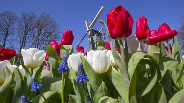 NYT: В России уже не делают секрета из причин «цветочной войны» с Голландией