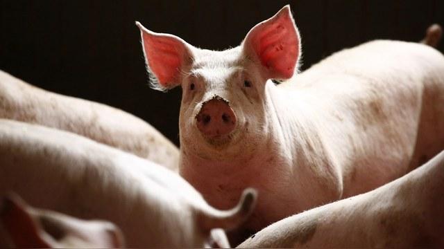 SZ: За санкции французские фермеры «макнут» политиков в навоз