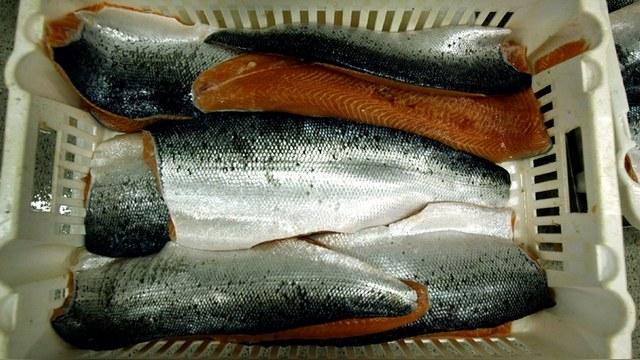 BarentsObserver: Россия пригрозила уничтожать норвежскую рыбу на границе