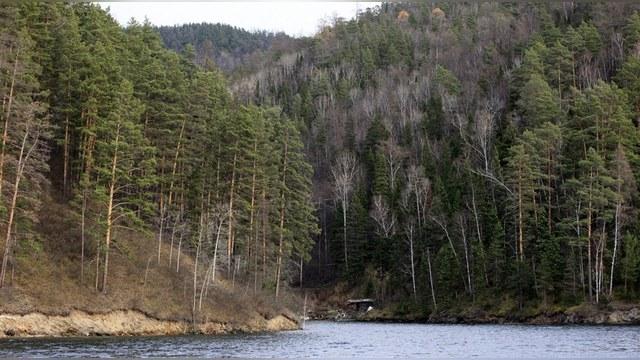 Американские ученые признали Россию «лесной сверхдержавой»