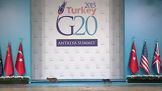 Independent: Кошки «затмили» Обаму и Путина на саммите G20