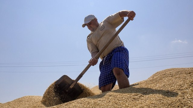 Украина обеспечит Турцию зерном и маслом вместо России