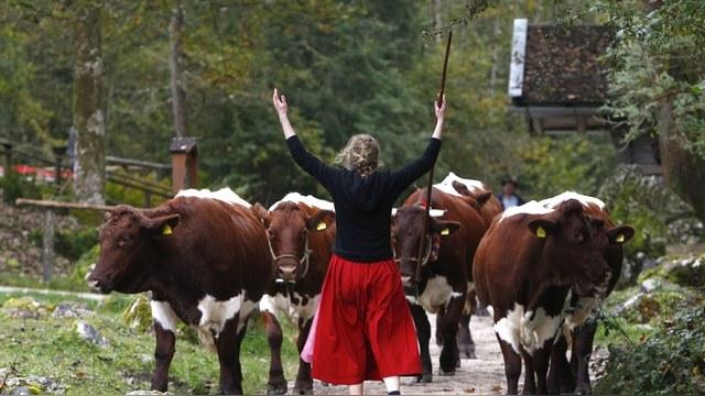 EurActiv: Немецкие фермеры призывают ЕС «передумать» санкции против России