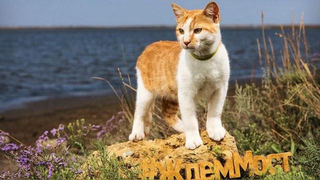 Global Voices: В строительстве моста в Крым Россия ставит на кота