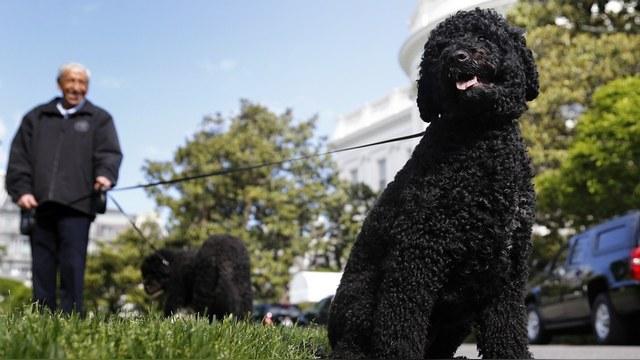 WP: Спецслужбы США не дали «сыну Кеннеди» похитить собак Обамы