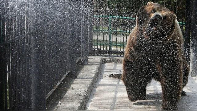 WT: США нужен лидер, который одолеет «русского медведя»