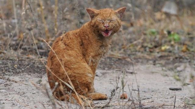 Daily Mail: Верный кот из Белгорода все ждет бросивших его хозяев