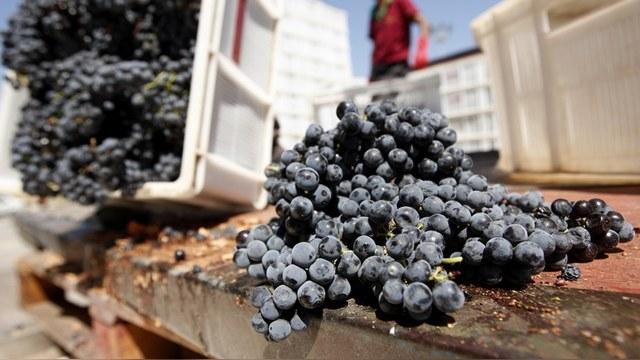 Yeni Safak: Россия предложила Турции обсудить поставки овощей и фруктов
