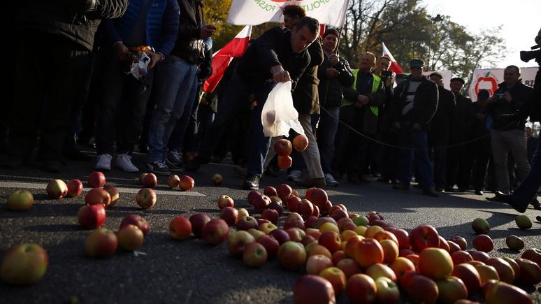 FT: Поляки в ужасе от рекордного урожая яблок – столько «против Путина» не съесть