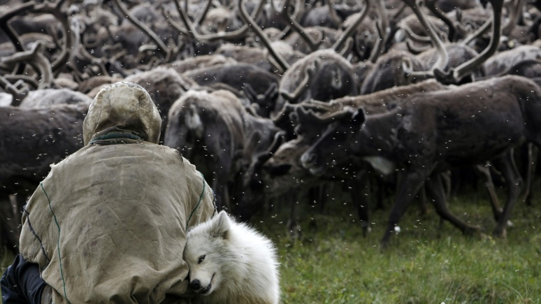 Le Monde: В России из-за потепления просыпаются древние инфекции