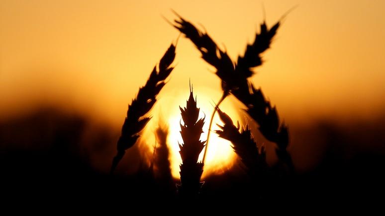 Spiegel: Россия впервые заработала на сельском хозяйстве больше, чем на оружии