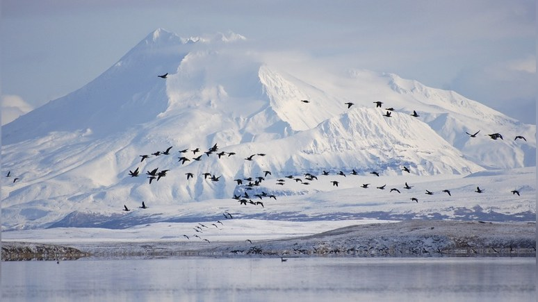 Daily Star: Вторжение в Америку русские начнут с захвата Аляски