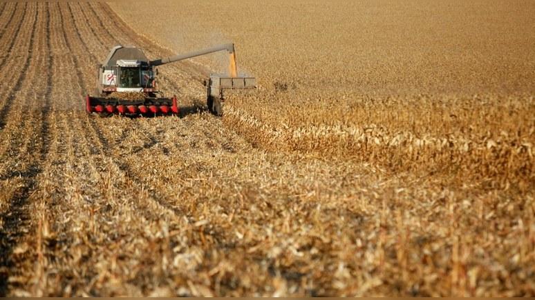 Politico: Россия выбилась в сельхозлидеры благодаря погоде, а не эмбарго