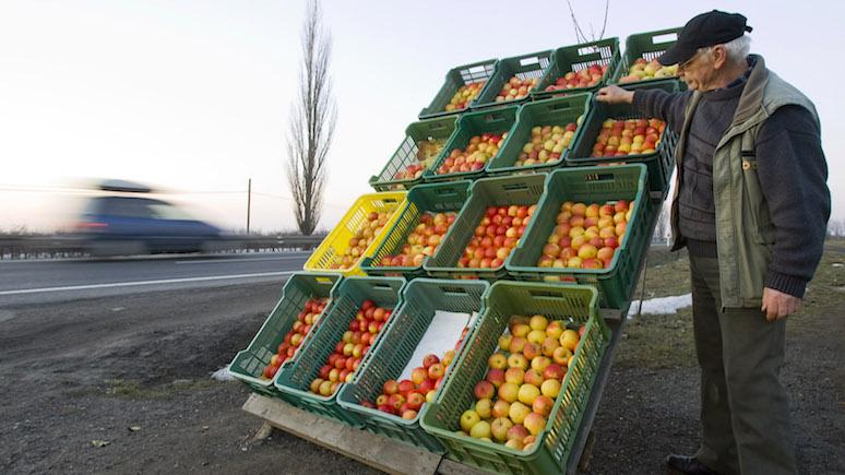Как бы белорусские: экспорт польских яблок в Россию приблизился к докризисному уровню