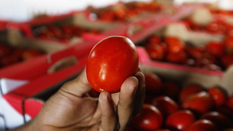 TRT: России нужны турецкие помидоры, а Турции — новые рынки сбыта