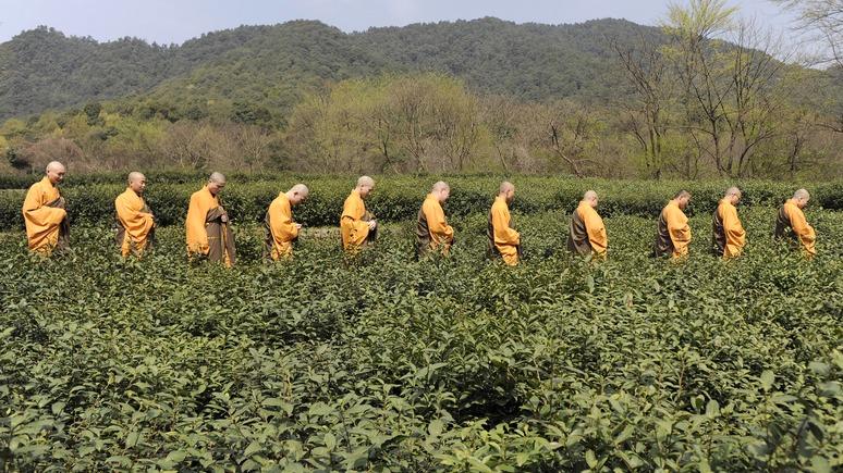 China Daily: Китай возрождает Чайный путь до Санкт-Петербурга