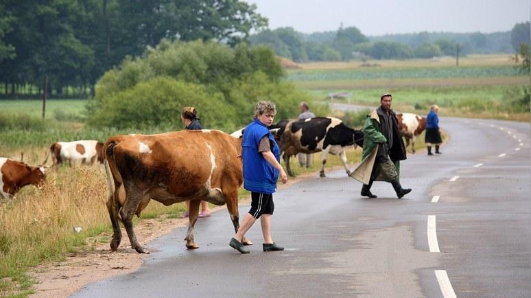 Bloomberg: санкции вынудили Danone сослать в Сибирь 5 тысяч коров