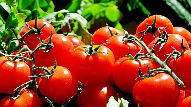 Yeni Safak: «томатный кризис» в отношениях с Россией завершится до зимы