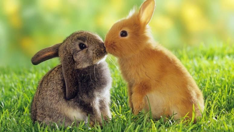 Times: из-за спада рождаемости полякам поставили кроликов в пример